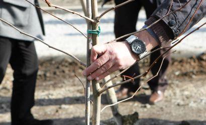 Më shumë pemë dhe gjelbërim rreth ambienteve të shkollave
